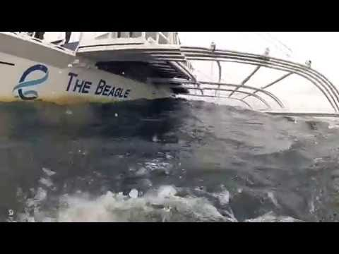 Malapascua (Banner Fish Point ) - Full Dive