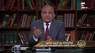 وإن أفتوك: آثر الذكاة في الحيوان البري مأكول اللحم .. د. سعد الهلالي