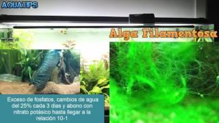 Como eliminar algas de acuario    Guia paso a paso    AquaTips