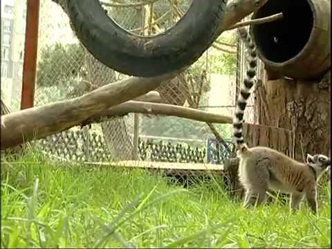 მედიატური თბილისის ზოოპარკში / Media tour in Tbilisi Zoo