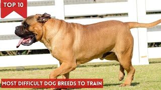 Top10 most difficult dog breeds to train