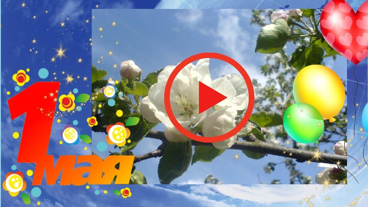 Видео поздравление с 1 мая для ватсап, поздравительные
