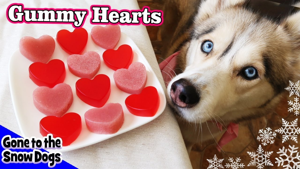 Valentine S Day Strawberry Gummy Dog Treats Diy Dog Treats Recipe