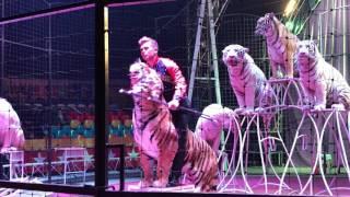 """Demidov Circus """" Big Cats Show """""""