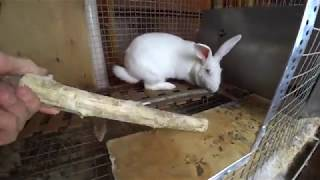 Feeding of rabbits: twigs feed