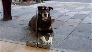 Девушка хотела угостить собаку за окном пиццой, но передумала, увидев медальон с запиской...