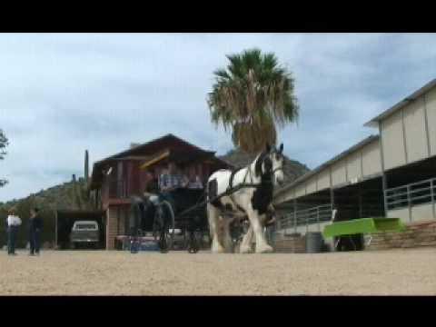 Desert Jewel Gypsy Horses Open House 2009