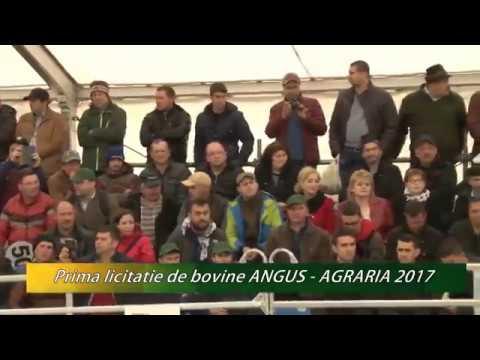 Prima licitatie de bovine Angus din Romania - in premiera la AGRARIA 2017
