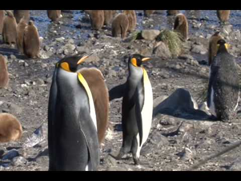 South Georgia Island: A Southern Ocean Paradise