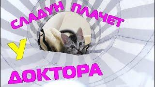 Котёнок Сладун, как твоя лапка? | малыш плачет, больно!!!