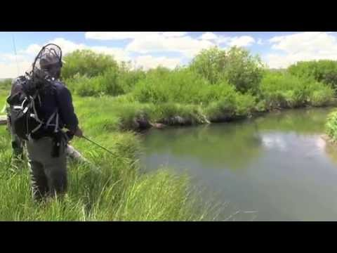 Fly fishing for Cutthroat Trout and Grayling in Montana