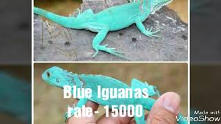 All Exotic Pets animals and reptile Price in india