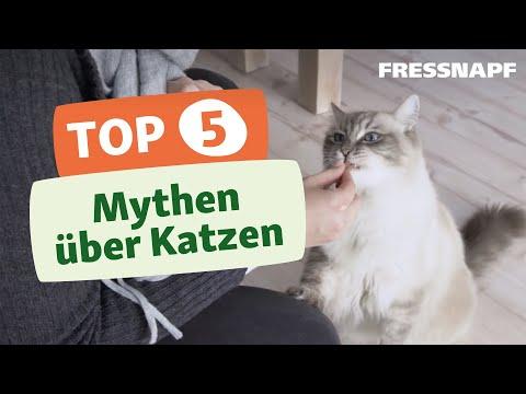 Top 5 Mythen über Katzen