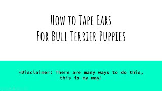 How to Tape Bull Terrier Ears (Puppy Edition)