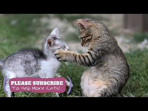 Music Help Cats Sleep,  2 Hours Soothing Music for Cats, Cat Sleep Music with Anxiety ☯LCZ07