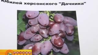 видео Крыжовник Памяти Нигруля