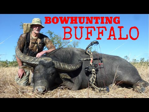 Bowhunting Buffalo Northern Territory Australia