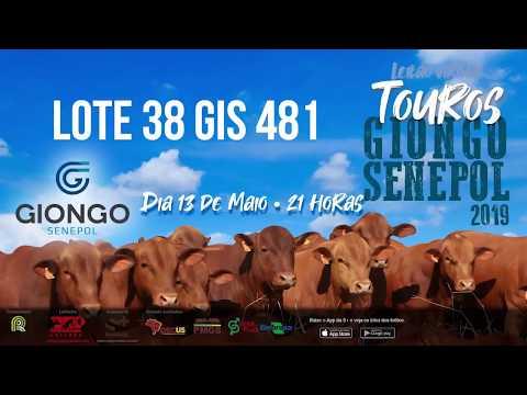 LOTE 38 GIS 481