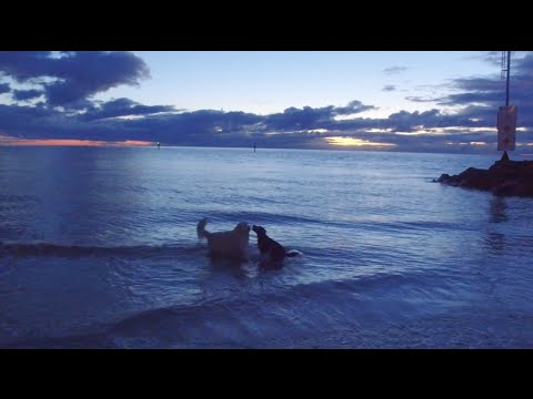 Dogs, Waves and a Sunset