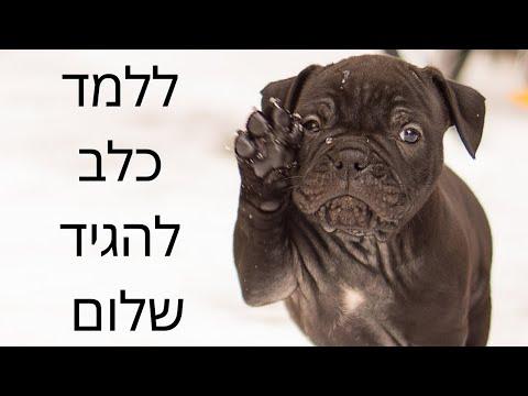 איך ללמד כלב להגיד שלום ברחוב - טל שלוש מאלף כלבים בכיר