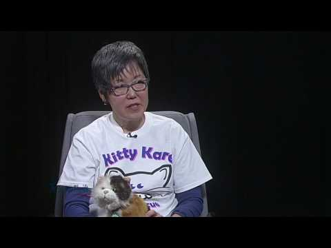 Around Town: Kitty Kare education session (VIDEO)