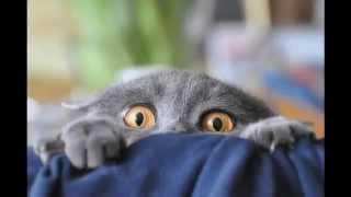 Фото приколы дня с удивленными котами