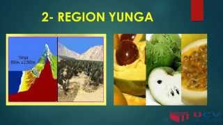 Las Riquezas De Las 8 Regiones Naturales Del Peru
