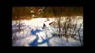 Snowshoe Nutties