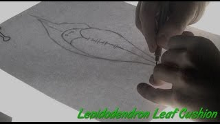 Speed Drawing of a Lepidodendron leaf cushion