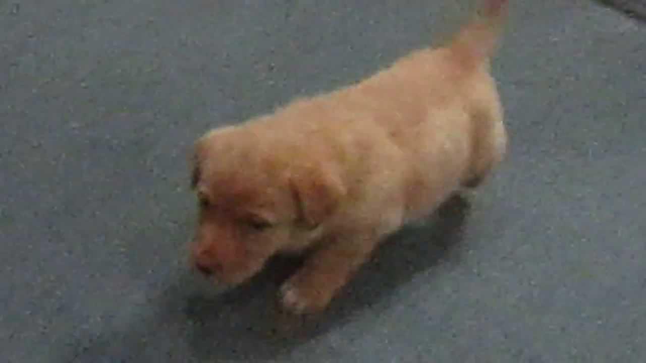 Animal Shelter   Puppies for Adoption   Virginia, DC, Maryland, Pennsylvania