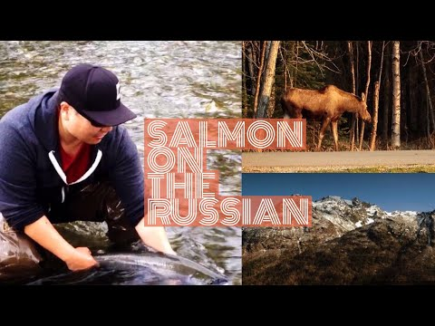 Russian River, Sockeye Salmon Fly Fishing, Father's Day, Alaska