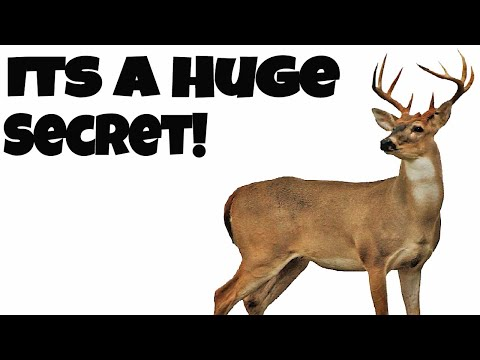What do Whitetailed Deer Eat? Its A Huge Secret