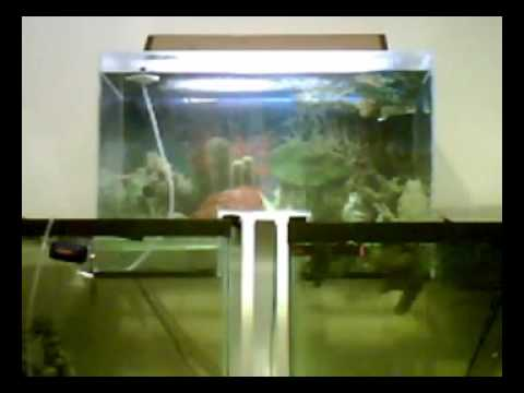 Connect two fish tanks alternative fill method diy for Connecting fish tanks