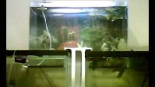 Connect Two Fish Tanks Alternative Fill Method Diy Aquarium Vacuum Pump