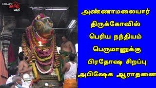 அண்ணாமலையார்-பெரிய நந்தியம் பெருமானுக்கு பிரதோஷ அபிஷேக ஆராதனை | Thiruvannamalai | Britain Tamil