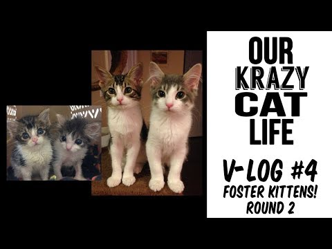 Video Blog #4 -- Foster Kittens Round 2, and our Kittens on the Arizona Morning News!