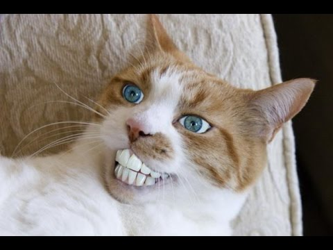 New cat battle 2014 october funny cat vines ultimate funny vines with cats compilation 2014 - Photo chat marrant ...