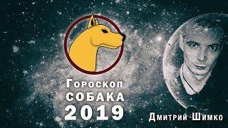 Гороскоп Собака -2019. Астротиполог, Нумеролог - Дмитрий Шимко