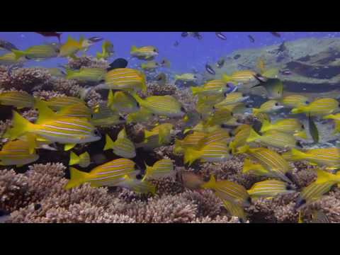 BIOT Before & After Coral Bleaching May 2016