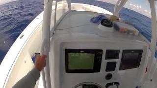 39 yellowfin running