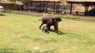 お世話してくれている飼育員さんが暴漢に襲われた時の象さんの反応