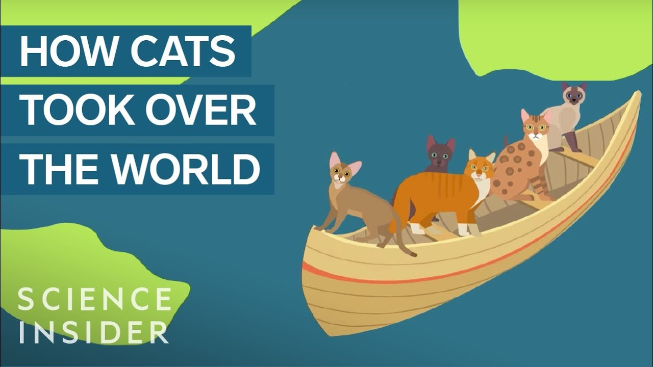 pics Animated map of how cats spread across the world