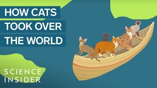 How Domestic Cats Spread Around The World
