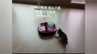 고양이가 로봇 청소기를 처음 보았을때 반응