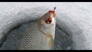 ЛАДОГА. КРЕНИЦЫ. ПЛОТВА. Зимняя рыбалка на плотву на Ладоге