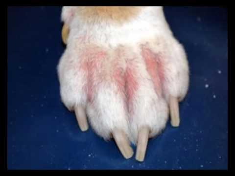 Аллергии у собак