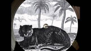 Tigerskin - Lied