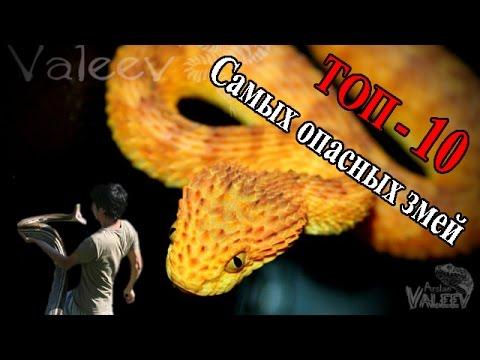 Самые опасные змеи! - YouTube