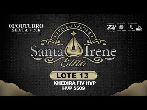 LOTE 13 Khedhira FIV HVP   HVP 5509