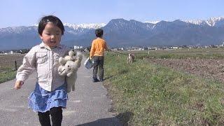 柴犬タロウと家族の日記。 ミイちゃんと散歩。